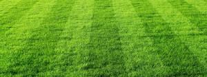Futbal priťahuje a vychováva... mal by. (foto: zelenazahrada.sk)