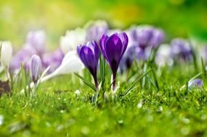 flower-316779_960_720