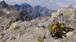 pri zostupe z vychodnej vysokej. medzi mnozstvom skal aj motyle predsa len nasli to, co hladali
