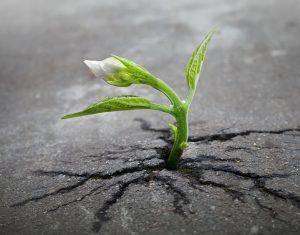 (foto: mindfulelement.com)